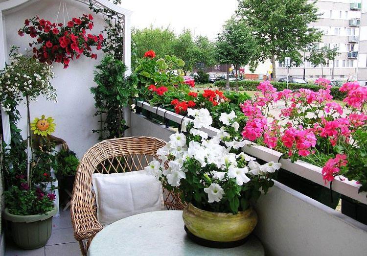 Сад без лишних хлопот и забот. Контейнерное садоводство балкон