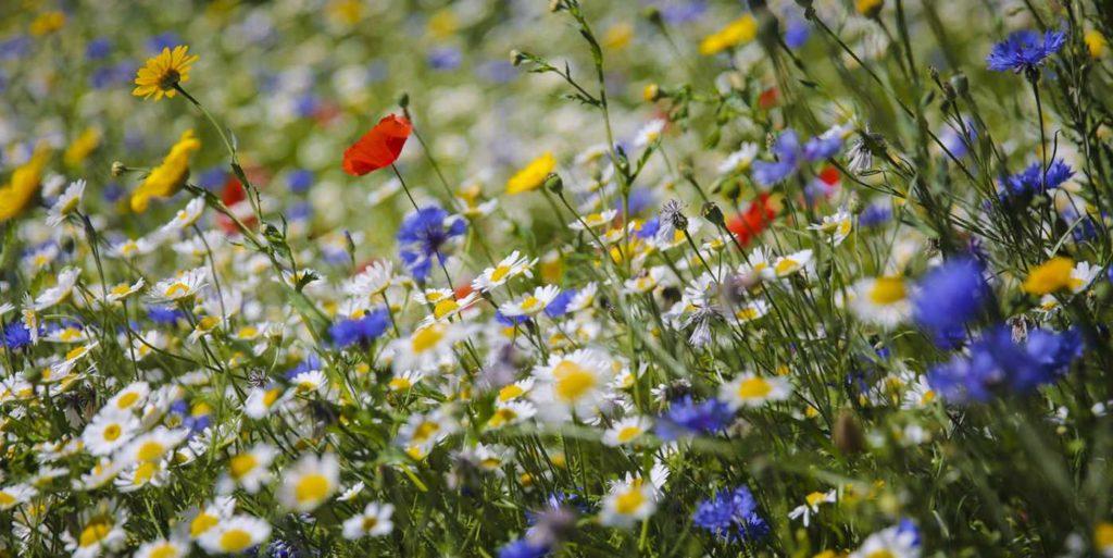 Сад цветущий луг поле Цветы.