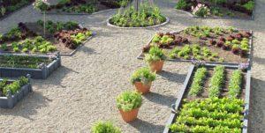 Учимся выращивать травы формальные сады клумба
