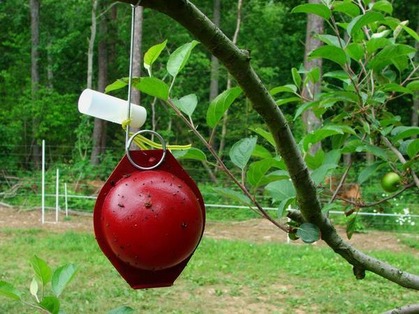 ловушка вредители мухи личинки фрукты ягоды