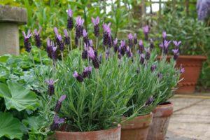 Как вырастить сад с низким уровнем обслуживания многолетние растения многолетники