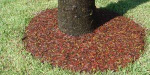 Как правильно мульчировать хвойники красная мульча дерево кора