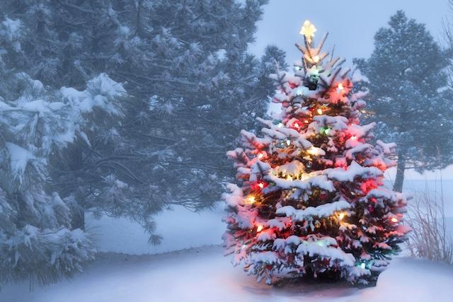 Ландшафтный дизайн с кустарниками снег гирлянда новогоднее дерево ель