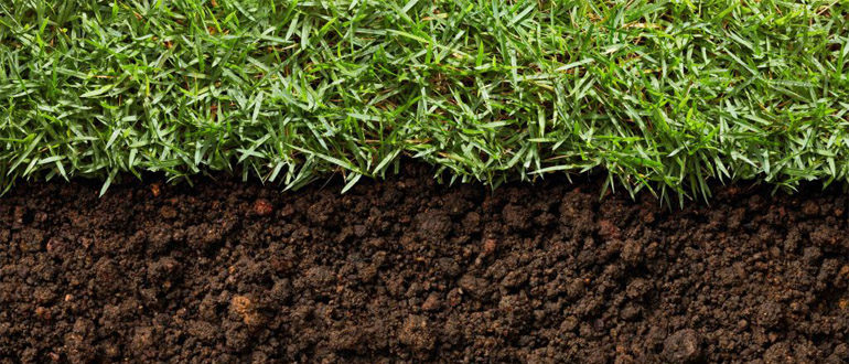 Почва для травы
