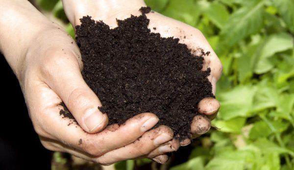 Подготовка почвы для посадки трав в саду анализ почва