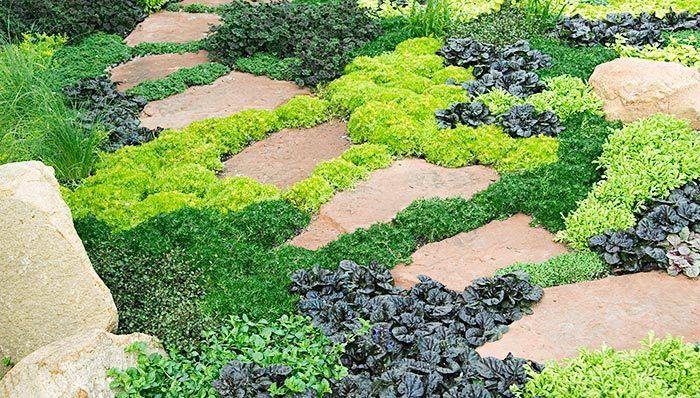 вырастить сад с низким уровнем обслуживания почвопокровные растения