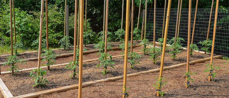 Поддержка растений