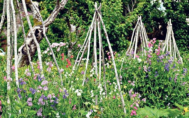 Правильная поддержка садовых растений вигвам ветки