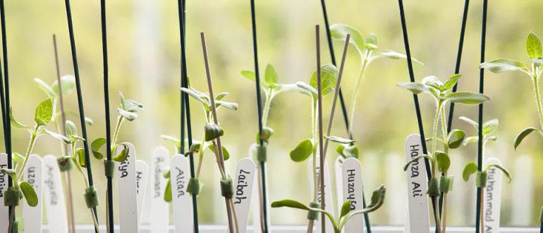 Подпорки для растений