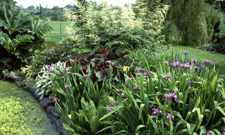 Сад пруд растения влаголюбивые цветы Кустарники