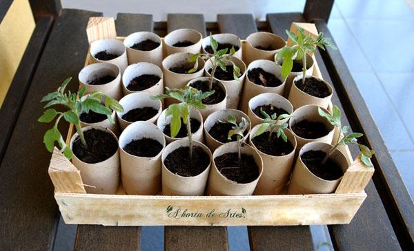 Как выращивать овощи картонные тубы туалетная бумага