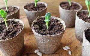 Как выращивать овощи торфяные горшки рассада