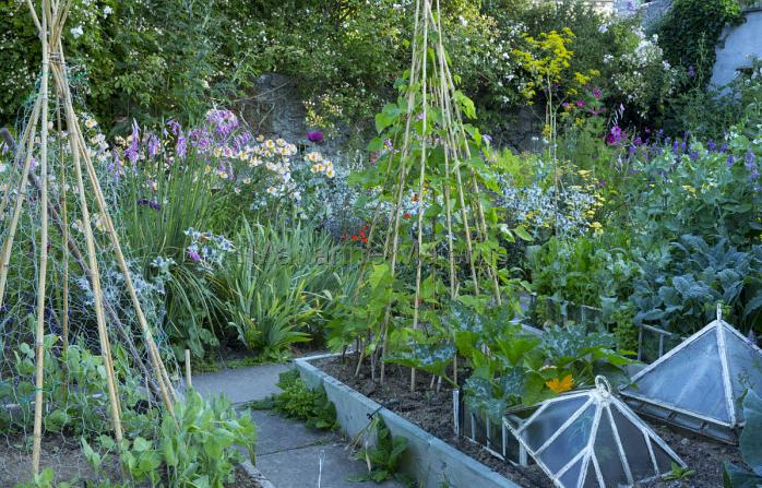 Как выращивать овощи вигвам шалаш растения огород