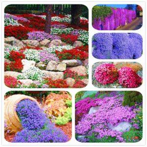 Обриета Сад Цветы