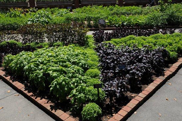 Советы по выращиванию трав клумба