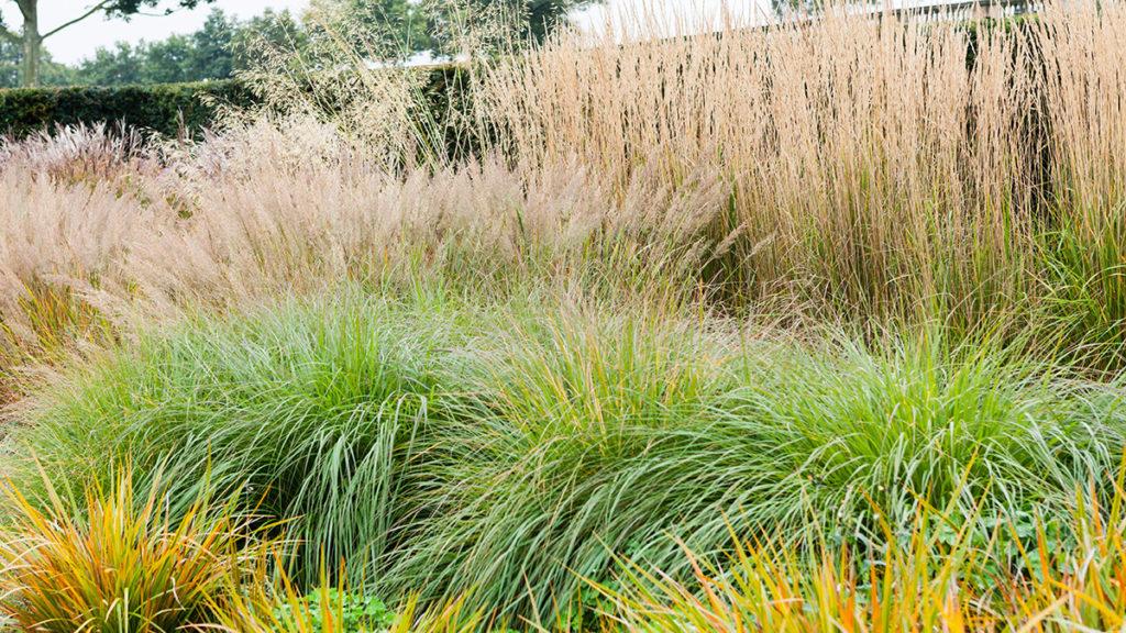трава декоративная Многолетники средняя почва многолетние растения травы
