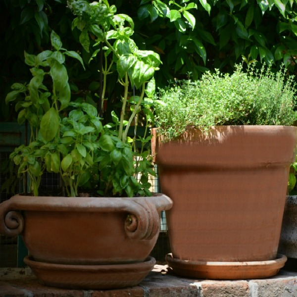 Учимся выращивать травы травы глиняный горшок
