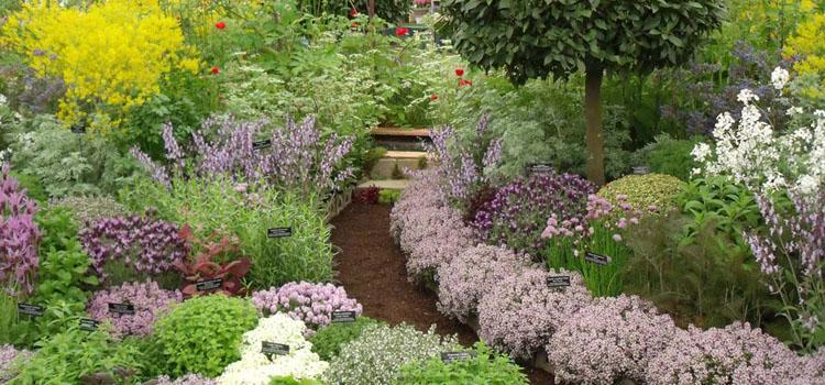 Учимся выращивать травы сад цветы ароматные