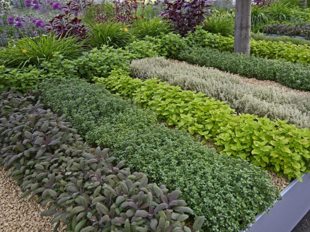Учимся выращивать травы травной сад кулинарные