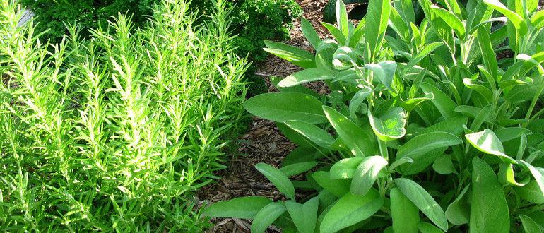 Травяной сад