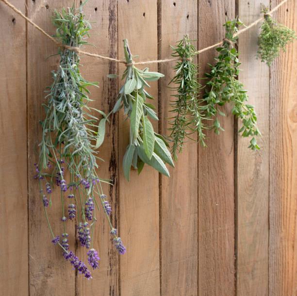Советы по выращиванию трав сушка урожай хранение