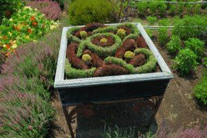 Учимся выращивать травы узловые сады сад
