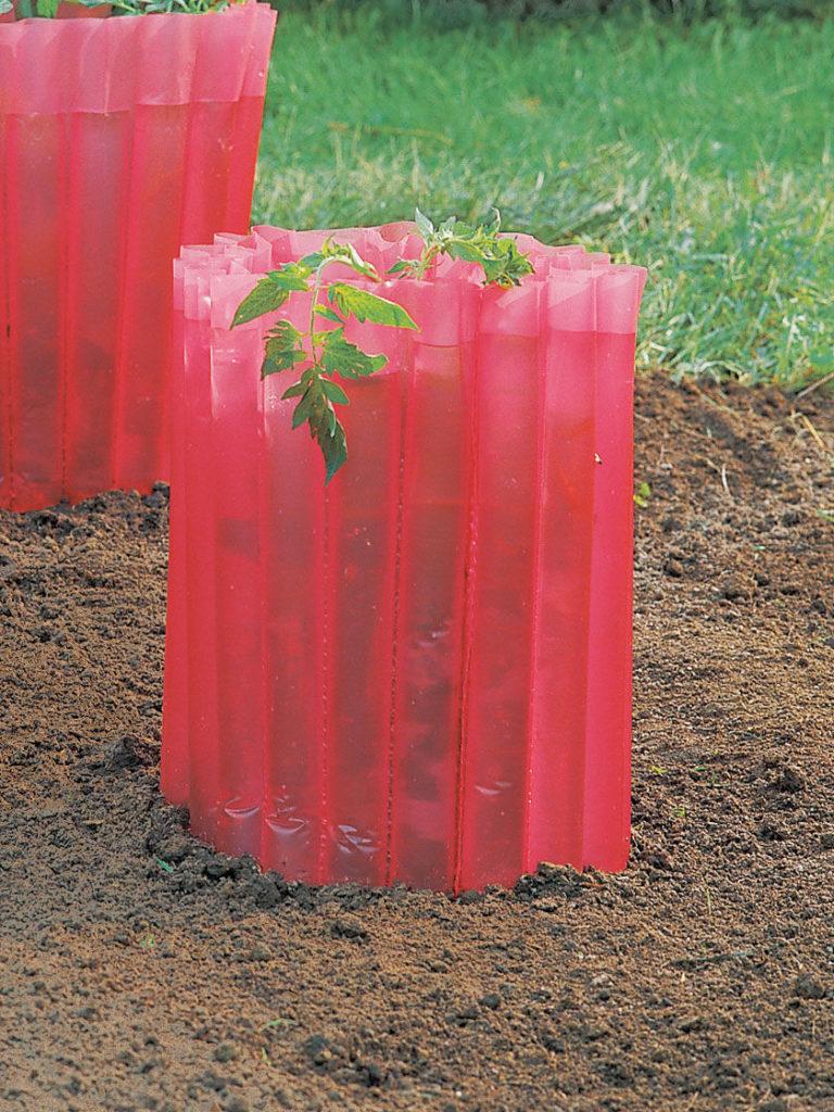 Как выращивать овощи подготовить семена теплица вода