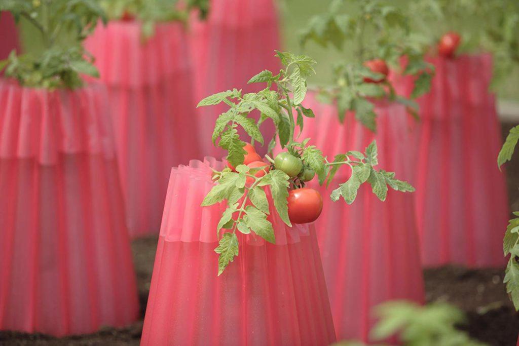 Как выращивать овощи помидоры томаты пластиковое приспособление укрытие растения