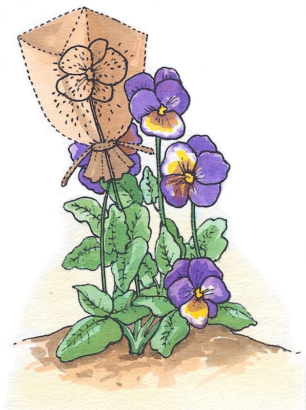 Размножение однолетников семена сбор семян пакет однолетние растения