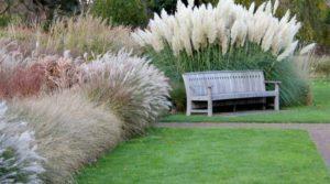 Декоративная трава цветы однолетние однолетники растения
