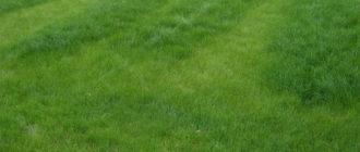 Домашнее удобрение газона