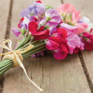 Душистый горошек цветы однолетние однолетники растения