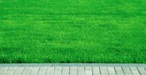 газон росичка песчаная уход сорняки