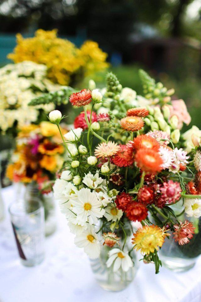 букет цветы однолетние однолетники растения