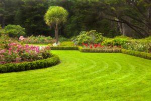 использовать английскую соль в саду сульфат магния соль эпсома удобрение газон