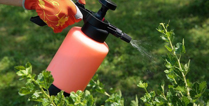Предотвращение болезней и вредителей однолетних цветов однолетники опрыскиватель