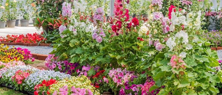 Однолетний сад