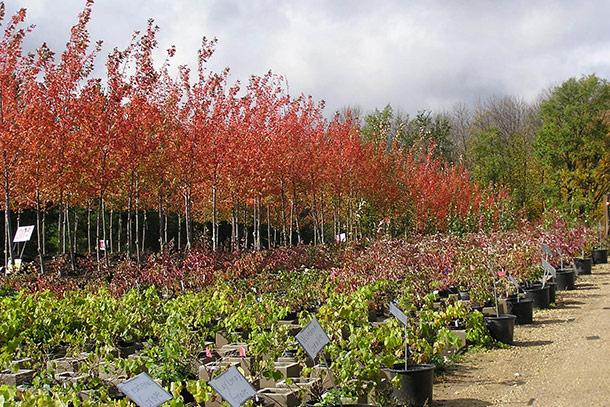Лучшее время посадки дерева питомник саженцы
