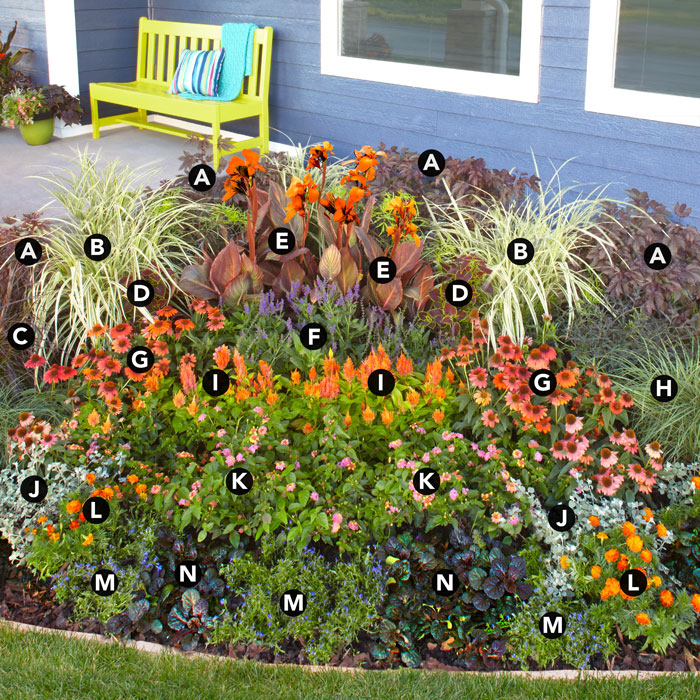 Выращивание однолетнего сада клумба цветы