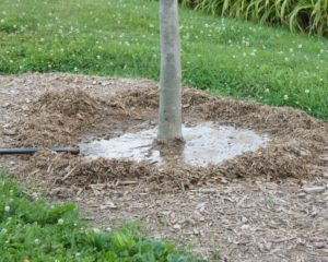 Лучшее время для посадки дерева полив газон