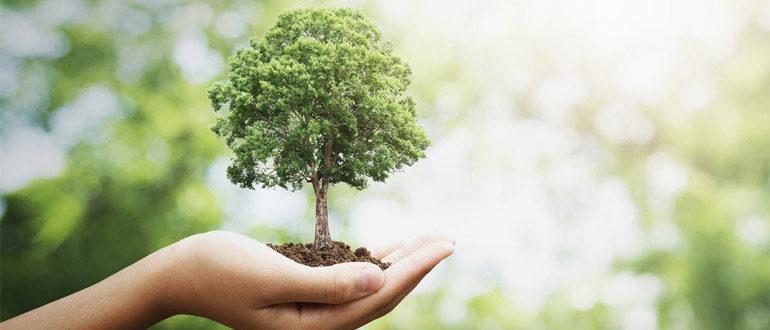 Посадка дерева