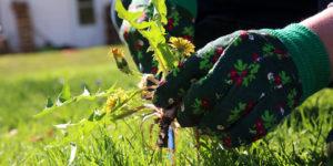 прополка сорняки руки перчатки садовые