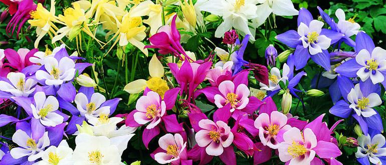Сад с однолетними цветами