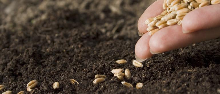 Семена растений