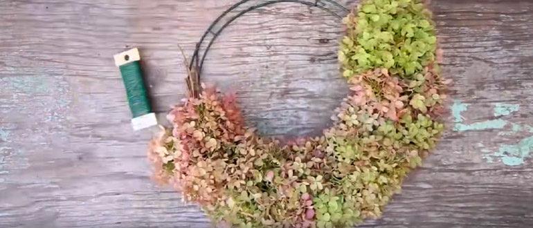 Сухие цветы гортензии