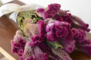 Целозия сухоцветы сухие цветы растения букет композиция