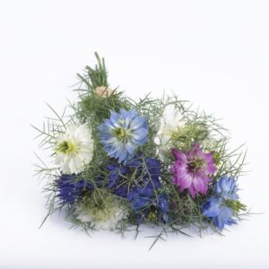 Чернушка дамасская сухоцветы сухие цветы растения букет композиция Девица в зелени