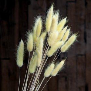 декоративная трава сухоцветы сухие цветы растения букет композиция