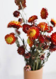 Гелихризум Strawflower сухоцветы сухие цветы растения букет композиция