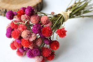 Гомфрена сухоцветы сухие цветы растения букет композиция